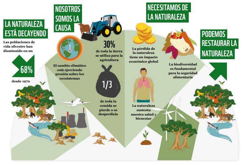 La pérdida de biodiversidad quedó reflejada en el nuevo informe de WWF (Foto: Fundación Vida Silvestre Argentina)
