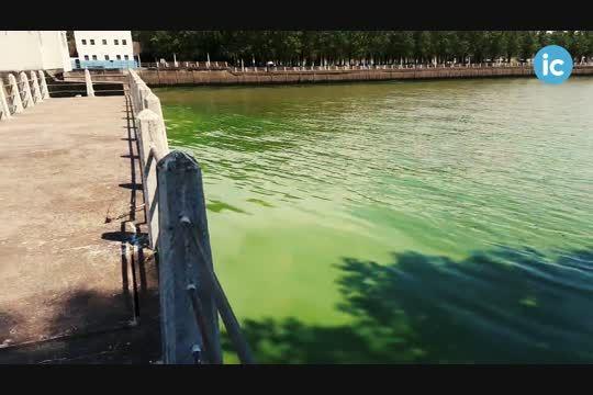 el agua verde llego a ensenada: mira las imagenes de la invasion de algas