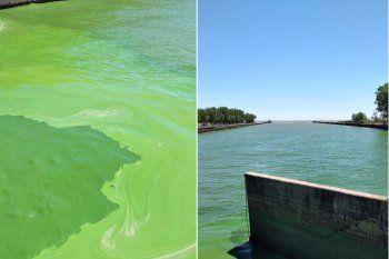 Las algas tiñeron de verde las costas de Punta Lara y ABSA tomó medidas.