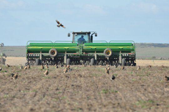 buenas perspectivas para el cultivo de trigo, que podria crecer hasta un 23% en los proximos diez anos