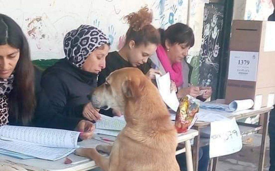 El Guasón de Lanús, el perro que quería votar y el mono ladrón, las perlitas que dejó el domingo de elecciones