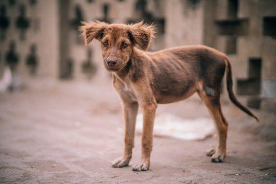 avanza una nueva ley que pena el maltrato animal con fuertes multas y hasta seis anos de carcel