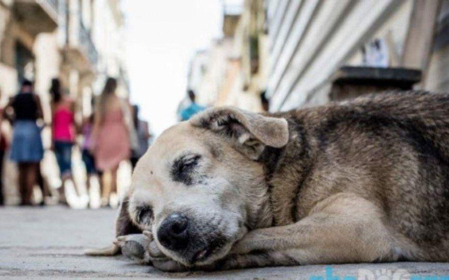 El Día Internacional de los Animales Callejeros, una oportunidad para reivindicar la adopción
