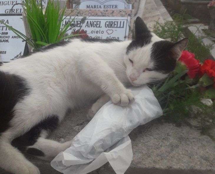 Darío tomó como una señal la presencia de la gata en la tumba de su mamá