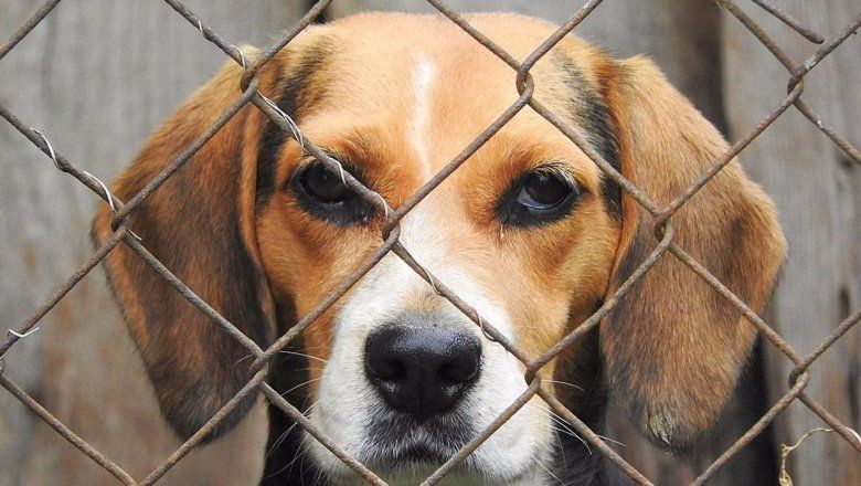 Por los que no tienen voz: ¿cuáles son los pasos a seguir para denunciar casos de maltrato animal?
