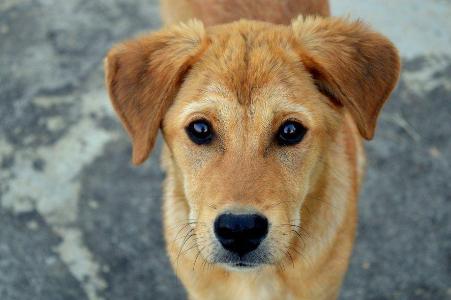 Nueva jornada para vacunar perros y gatos gratis en La Plata