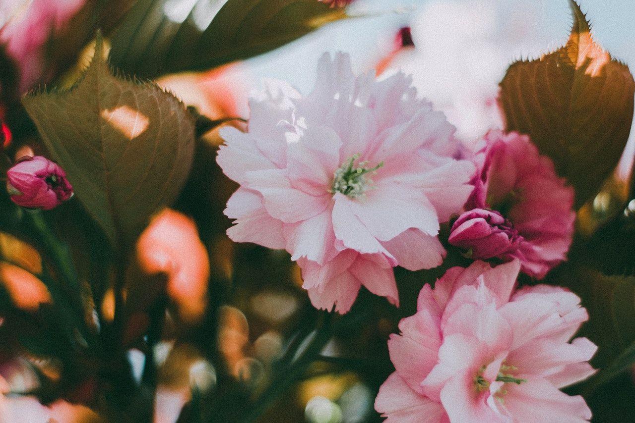 La primavera comenzará el miércoles este año