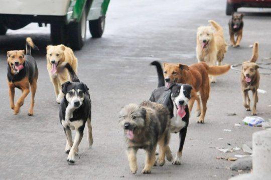coronavirus: pese a que no hay evidencia de contagio en animales, veterinarios de la provincia elaboraron una guia de prevencion