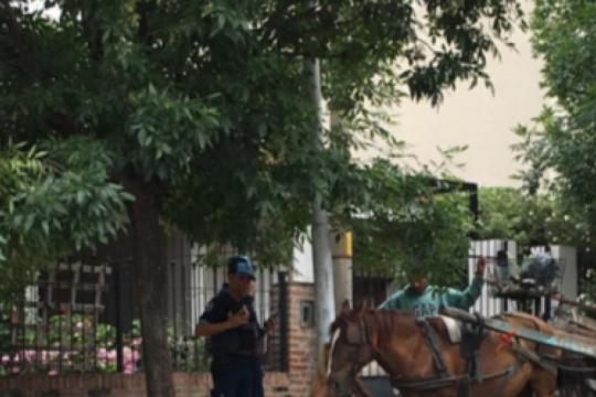 polemica con la fundacion sin estribo: rescataron un caballo usado para cartonear y abrieron un debate en las redes