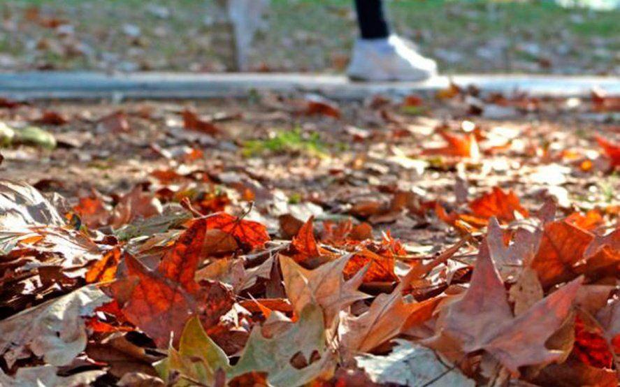 Llegó el bajón del otoño: Enterate por qué es la estación del año con menos seguidores