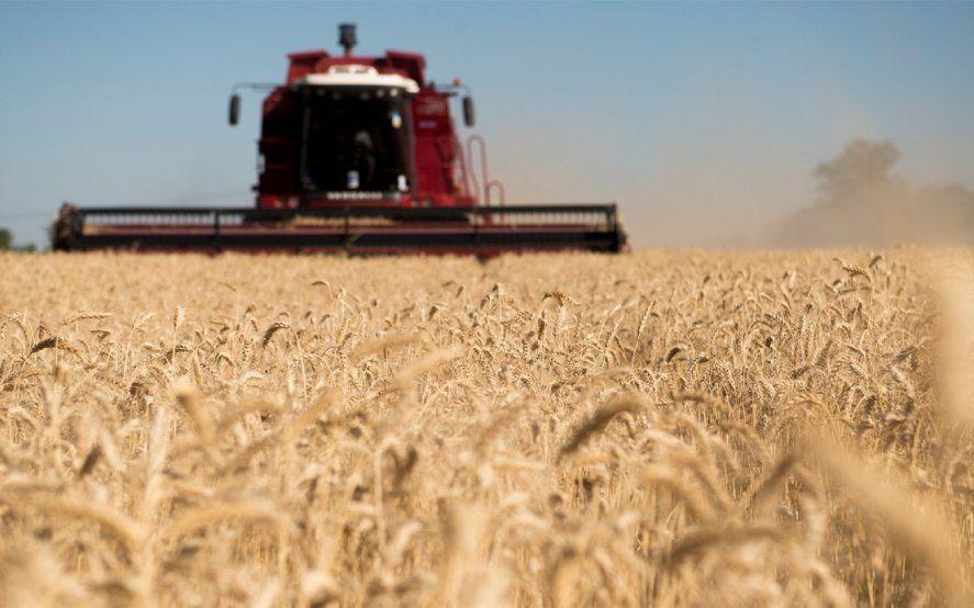 En exportaciones agroindustriales, el trigo bonaerense pisa fuerte en el mercado brasileño