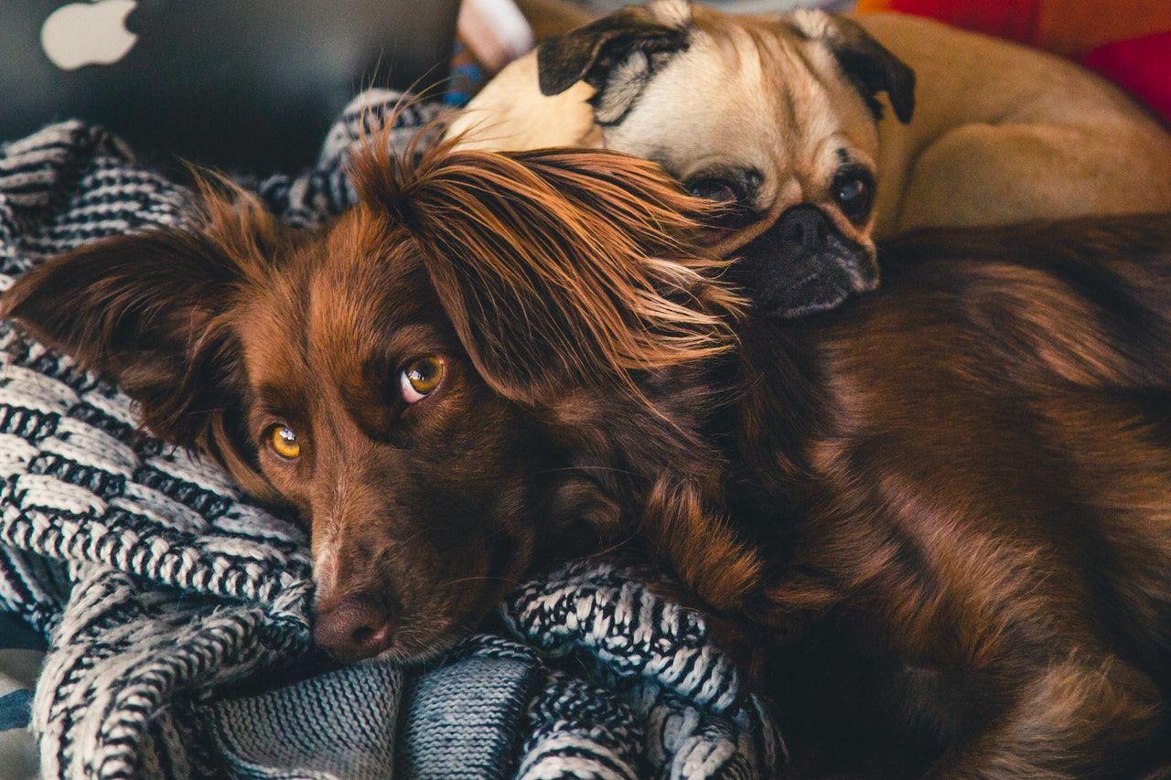 Los perros también pueden padecer enfermedades raras.