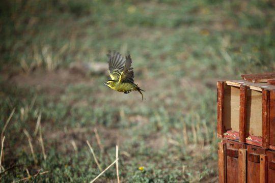 villarino: reinsertan 19 aves en peligro de extincion