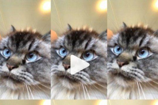 mr. sandman challenge: siete versiones del reto viral que hace bailar a las mascotas de todo el mundo