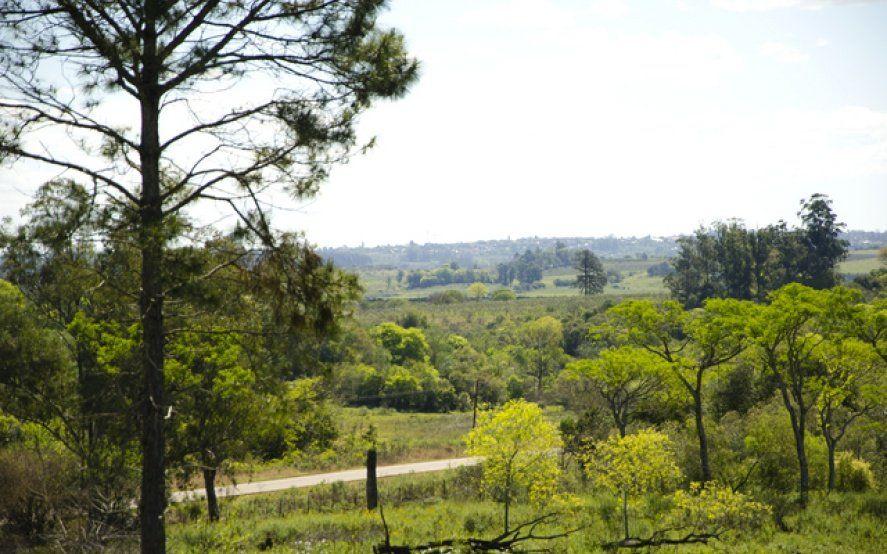 La UNLP cede más de 6 mil hectáreas a comunidades guaraníes en Misiones: Es un avance histórico