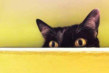 Un veterinario explicó cómo atravesar una mudanza con gatos como mascotas.