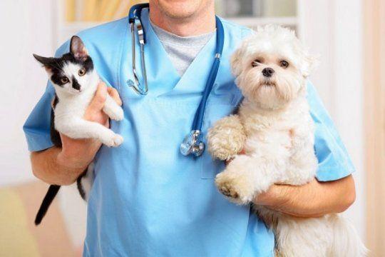 dia del veterinario y del ingeniero agronomo: por que se celebran el 6 de agosto