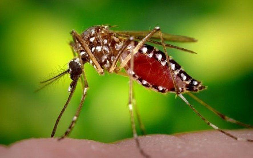 Por el cambio climático y las migraciones, aumentan las chances de contraer dengue este verano en La Plata