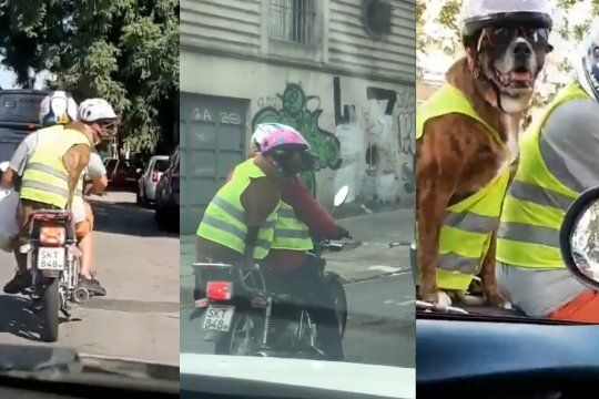 video viral: un perro motoquero genera furor en las redes