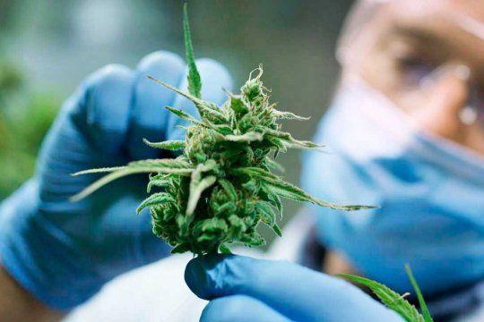 Provincia presentó un proyecto para regular la producción y comercializaciónde cannabis medicinal