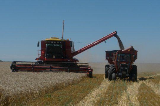 por condiciones climaticas adversas, estiman una caida de un millon de toneladas en la cosecha de trigo