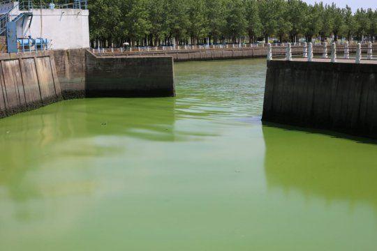 Así se ven las costas de La Plata, Berisso y Ensenada por la llegada masiva de algas.
