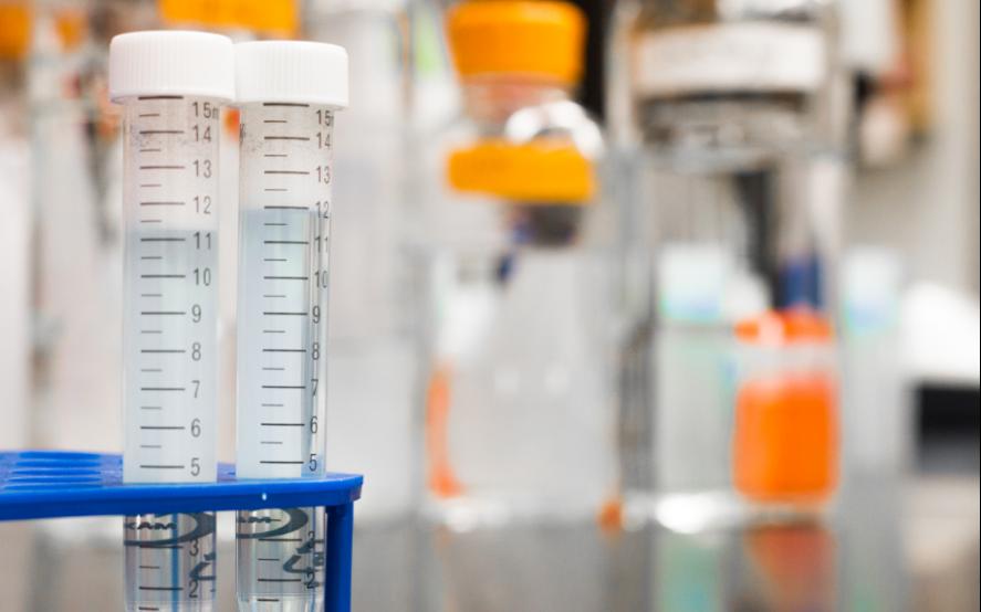 La vacuna de la Universidad de Oxford generó anticuerpos. Foto de Martin Lopez en Pexels