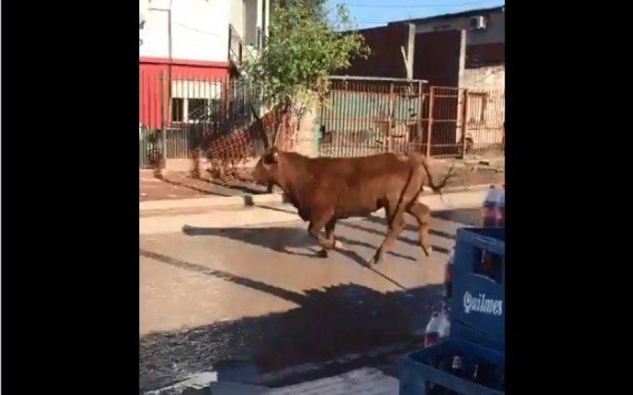 Video: un toro se escapó del matadero y atacó a una mujer hasta dejarla inconsciente