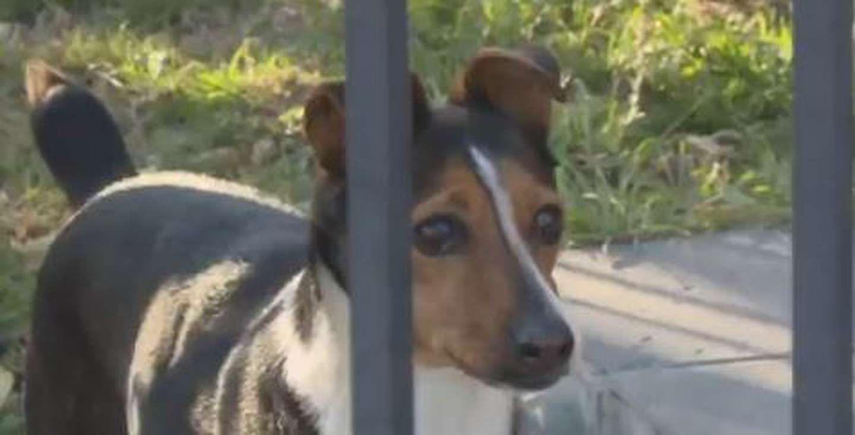 cordoba: en un robo, defecaron y se limpiaron con el perro