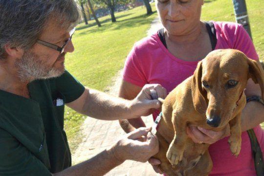 proteccion animal en la plata: asistieron a mas de 10 mil mascotas gratis en lo que va del ano