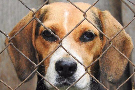 por los que no tienen voz: ¿cuales son los pasos a seguir para denunciar casos de maltrato animal?