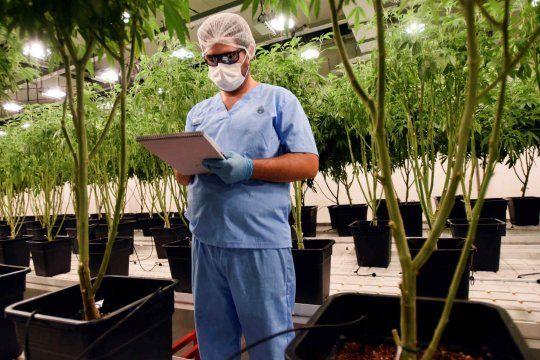 Provincia incorpora el aceite de cannabis en hospitales
