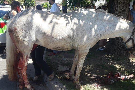 El caballo es trasladado al Centro de Rehabilitación y Rescate Equino