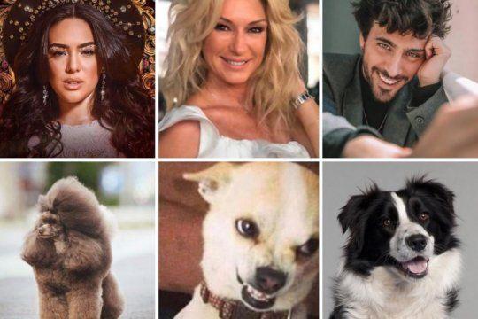 ¿a que perros se parecen los famosos del cantando 2020?
