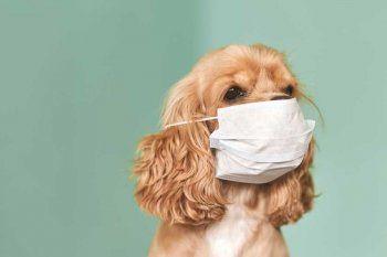 Animales estresados: las nuevas consultas en veterinarias