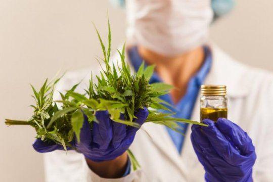 la unlp es la primera universidad publica en cultivar cannabis con fines cientificos