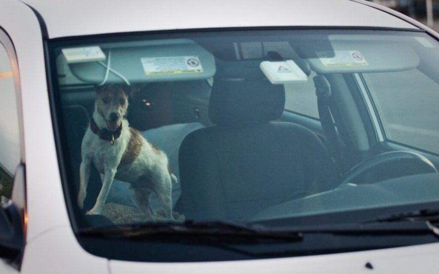 """""""Modo perro"""" el polémico sistema tecnológico para dejar a tu mascota en el auto"""