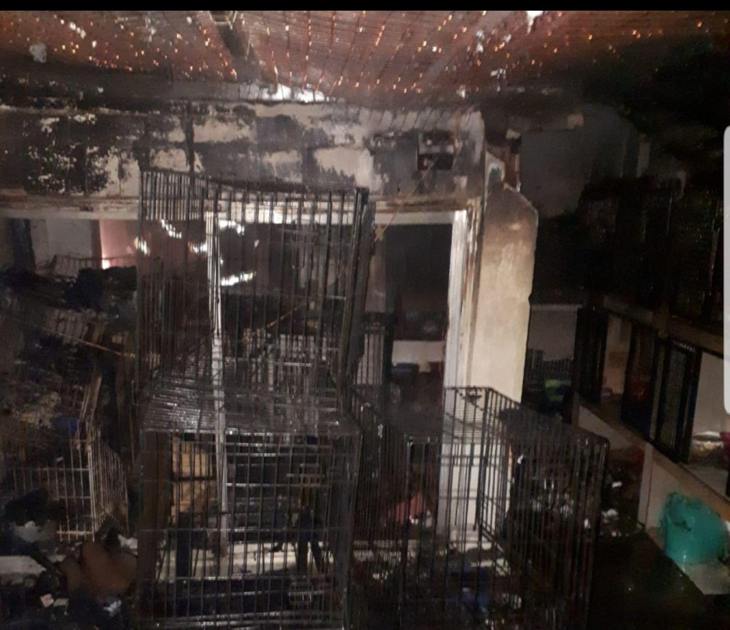 El refugio de animales en Quilmes que sufrió un incendio en el cual murieron muchos gatos (foto diario Perspectiva Sur)