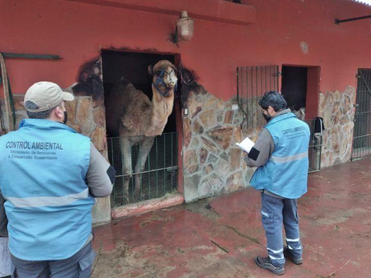 Zoológico de Luján: tensión durante el operativo de clausura