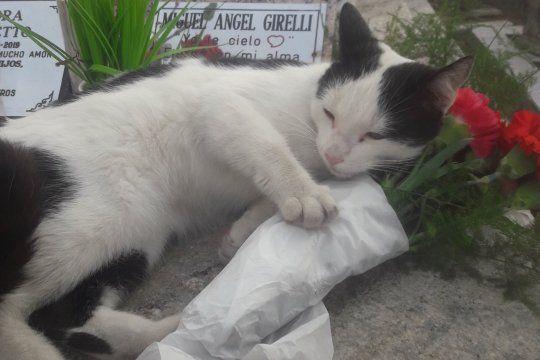 Darío cree que la gata es la misma que estuvo en su cas