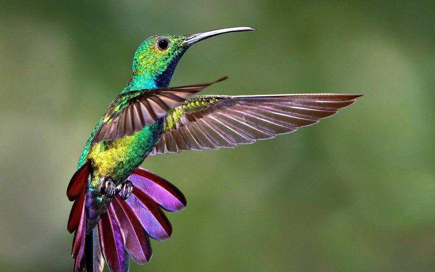 Los picaflores tendrán su espacio en la Provincia: abrirán el primer jardín de colibríes del país