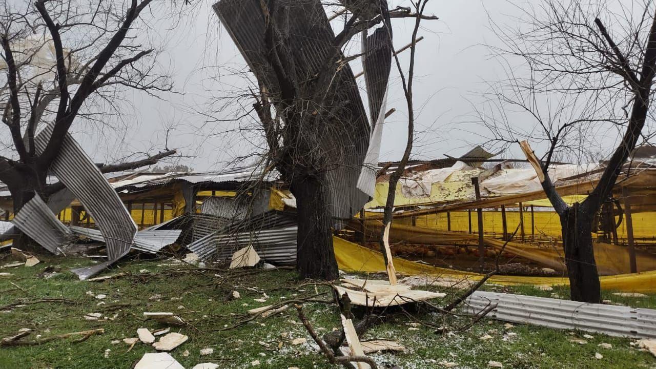 El temporal causó destrozos en una granja de Saladillo ( foto La Síntesis)