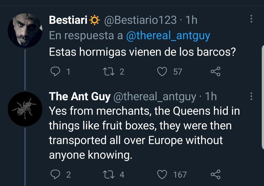 La solemne y sería respuesta del autor del post original sobre la colonia de hormigas argentinas ante la ironía del cuestionamiento