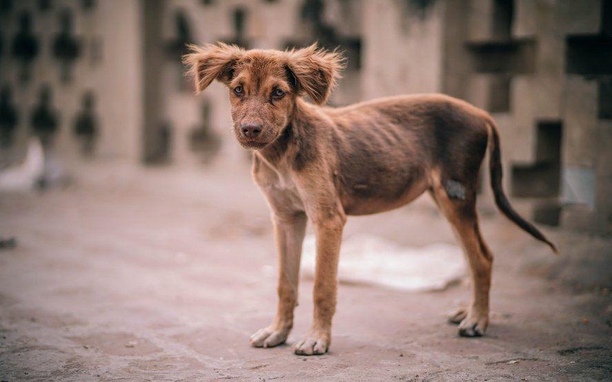 Avanza una nueva ley que pena el maltrato animal con fuertes multas y hasta seis años de cárcel
