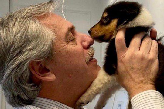 se agrando la familia: alberto fernandez presento a kaila, la nueva hija de su perro dylan