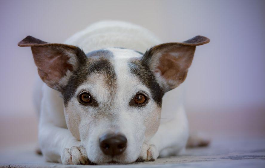 La jornada de vacunación está destinada a perros y gatos