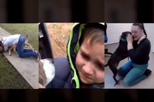 los mejores videos de reencuentros entre perros y duenos
