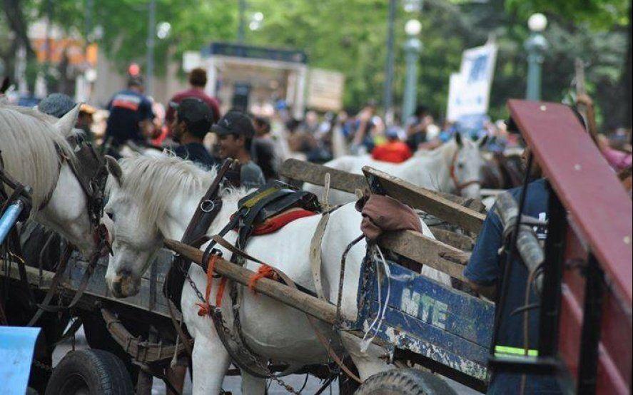 Amplio rechazo de la justicia a la ordenanza que prohibía el uso de caballos a los carreros