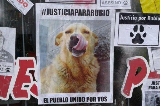 a un mes del brutal asesinato de rubio, marchan al congreso nacional en contra del maltrato animal