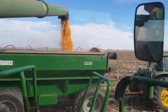 con 56 millones de toneladas, el maiz empieza a cerrar un record historico de produccion